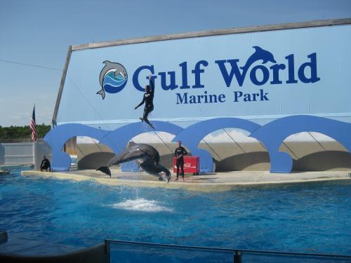Gulf World Marine Park In Panama City Beach Fl Virtual