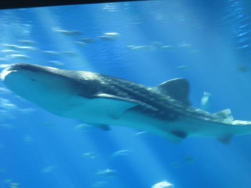 Georgia Aquarium In Atlanta Ga 2 Virtual Globetrotting
