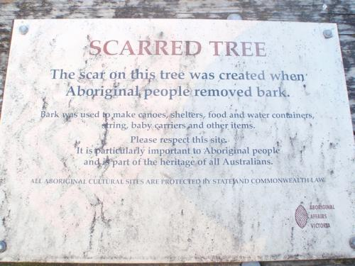 Scarred Tree Sign Bairnsdale