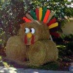 Turkey made of hay