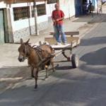Donkey (or horse)
