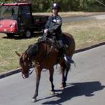 Mounted police patrolling
