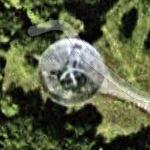 Stockert Radio Telescope - Germany's first radio telescope (Google Maps)
