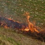 Burning Brush (StreetView)