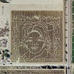 Oprah Maze (Google Maps)