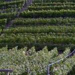 Vineyards (StreetView)