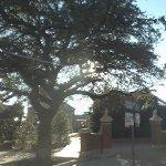 Toomer's Corner Oaks (StreetView)