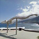 Sei Whale Skeleton
