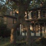 Tree Arch (StreetView)