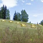 Gold Stars (StreetView)