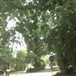 The Tree that Owns Itself (StreetView)