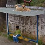 Dogs on top of the bus stop