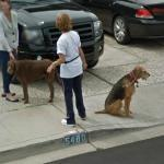 Dogs (StreetView)