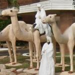 Camels (StreetView)