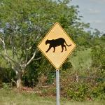 Panther Crossing (StreetView)