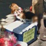 Basset Hound Selling Fresh Flower Leis
