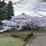 Tree (type?)