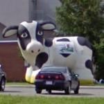 Inflated cow display (StreetView)