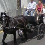 Horse Drawn Carriage (StreetView)