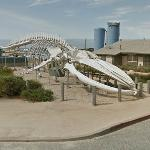Blue Whale Skeleton (StreetView)