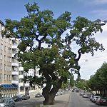 TV Oak (StreetView)