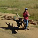 Man with a pile of tree trunks in his wheelbarrow