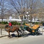 Horse-drawn carriage
