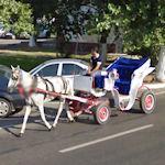 Horse car in Romania