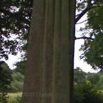 Devil's Arrow (StreetView)