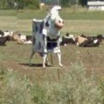 Junk Art Cow