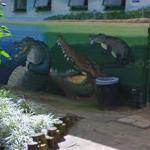 Crocodile mural