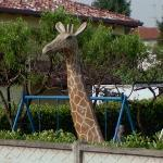Giraffe in Italian garden (StreetView)