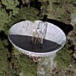 Bracewell Observatory