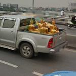 Pickup loaded with Golden Buddha Statues