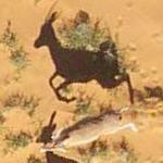Dorcas Gazelles (Google Maps)