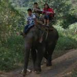 Elephant with riders