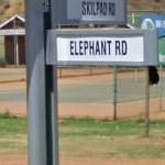 Elephant RD