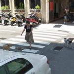 Woman vs Dogs (StreetView)