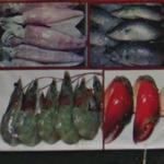 Squid, fish, prawn, lobster