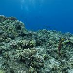 Google Maps Underwater (Molokini)