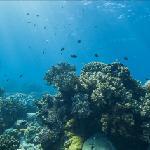 Google Maps Underwater (Apo Island)