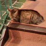 Cat (StreetView)
