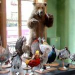 Taxidermy shop