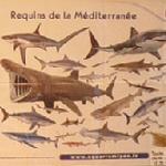 Mediterranean sharks