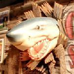 Shark (StreetView)