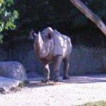 White Rhino (StreetView)