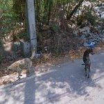 Couple of dogs (StreetView)