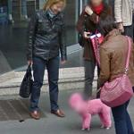 Have you ever seen pink dog!!! (StreetView)