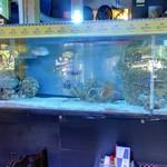 Aquarium with exotic fish (StreetView)