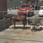 Amish cart (StreetView)